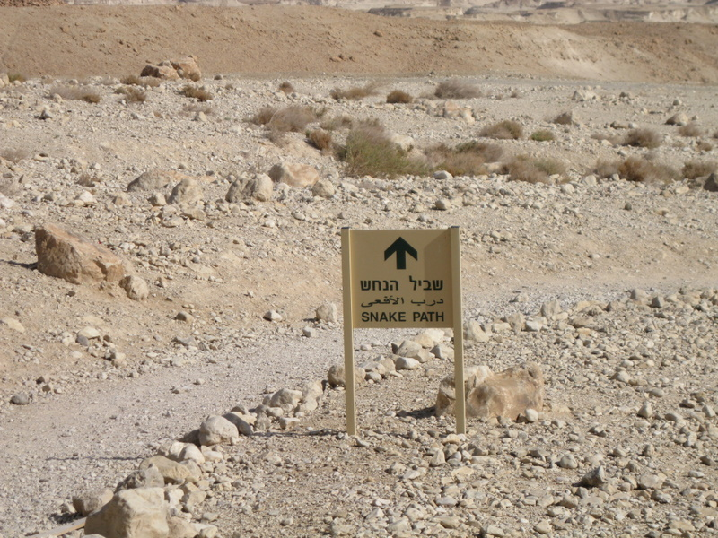 Masada - I opted to hike instead of taking the cable car